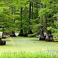 Arkansas Lake With Cypresses by Carol Groenen