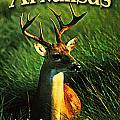 Arkansas White Tailed Deer by Flo Karp