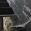 Arlington Web