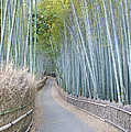 Asia Japan Kyoto Arashiyama Sagano by Rob Tilley