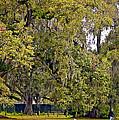 Audubon Park 2 by Steve Harrington