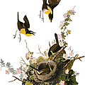 Audubon Raven By Granger