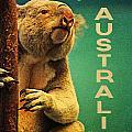 Australia Koala by Flo Karp