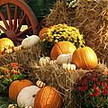 Autumn Bounty by Kathy Clark