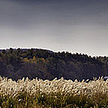 Autumn Grasses - North Carolina Autumn Scene by Rob Travis