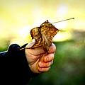 Autumn In Hand by Kelly Hazel