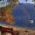 Autumn by Joana Kruse