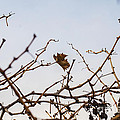 Autumn Leaf by Saajid Abuluaih