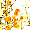 Autumn Leaves Abstract by Andee Design