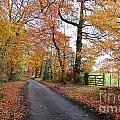 Autumn Leaves by Harold Nuttall