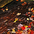 Autumn Leaves In River by Elena Elisseeva