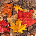 Autumn Leaves by Matt Dobson