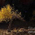 Autumn Light by Mike  Dawson
