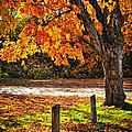 Autumn Maple Tree Near Road by Elena Elisseeva