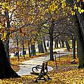 Autumn Park In Toronto by Elena Elisseeva