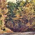 Autumn Railroad by Douglas Barnard