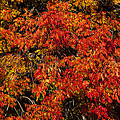 Autumn Red by Garry Gay