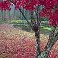 Autumn Red by Rob Travis