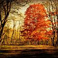 Autumn Trail by Kathy Jennings