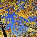Autumn Treetops by Elena Elisseeva