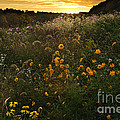 Autumn Wildflower Sunset - D007757 by Daniel Dempster