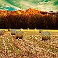 Bales Of Autumn by Bill Tiepelman