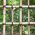 Bamboo Fence Detail Meiji Jingu Shrine by Bryan Mullennix