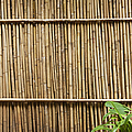 Bamboo Fence by Don Mason