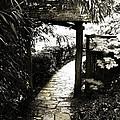 Bamboo Garden - 1 by Alan Hausenflock