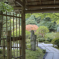 Bamboo Gate And Traditional Arch by Douglas Orton