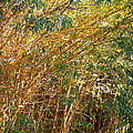 Bamboo Stand Please Buy Me by Michael Clarke JP