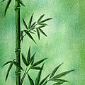 Bamboo Print by Svetlana Sewell