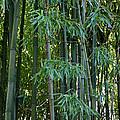 Bamboo Tree by Athena Mckinzie
