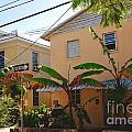 Banana Tree Lane In Key West by Susanne Van Hulst