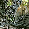 Banyan Tree And Park Bench by Dennis Clark