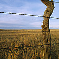 Barbed Wire Fence Along Dry Creek Road by Gordon Wiltsie