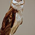 Barn Owl Of Michigan by LeeAnn McLaneGoetz McLaneGoetzStudioLLCcom