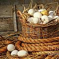 Basket Of Eggs On Straw by Sandra Cunningham
