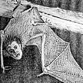 Bat Man Print by Arline Wagner