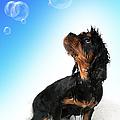 Bathtime Fun by Jane Rix