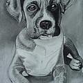Baxter by Kim Shayler
