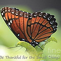 Be Thankful by Carol Groenen