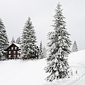 Beautiful Winter Landscape With Trees And House by Matthias Hauser