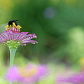 Bee Marks The Spot by Kathy Gibbons