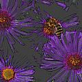 Bee with Asters on gray Print by ShaddowCat Arts - Sherry