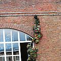Belgian Paratroopers Rappelling by Luc De Jaeger