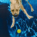 Belly Flop by Jill Reger