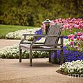 Bench In The Park by Cheryl Davis