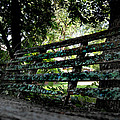 Benched by Tammy Cantrell
