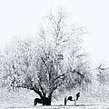 Beneath A Frosty Canopy by Mike  Dawson